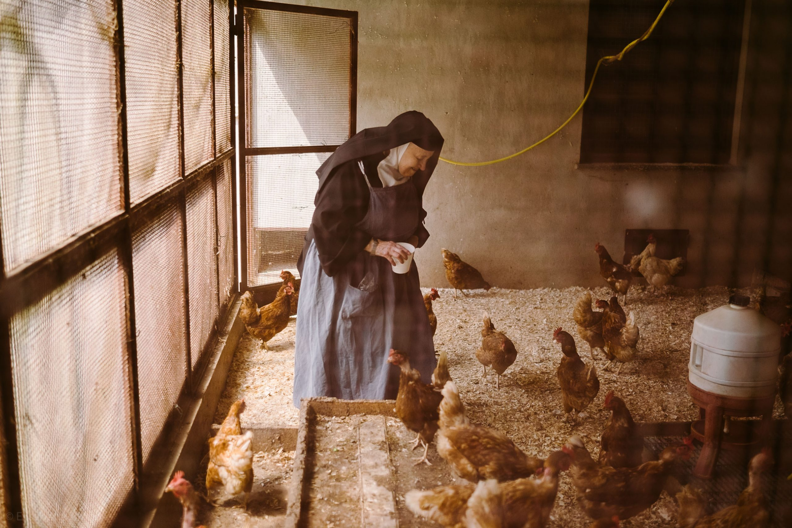 elisabetta riccio - from the clausus project, a nun while feeding the hens